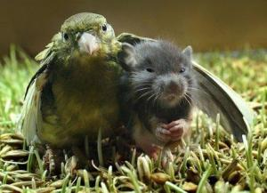 bird-hugs-mouse